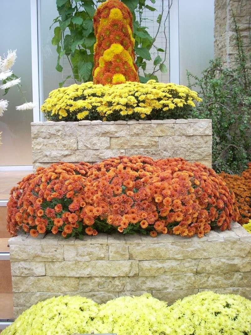 Expoziţia Flori de Toamnă-Iasi -23 octombrie – 20 noiembrie 2011-a XXXV-a editie Verni151