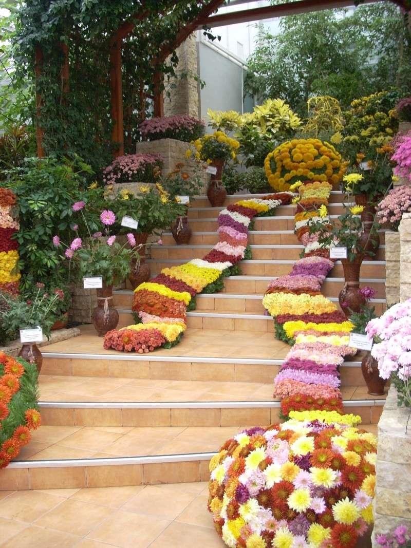 Expoziţia Flori de Toamnă-Iasi -23 octombrie – 20 noiembrie 2011-a XXXV-a editie Verni152