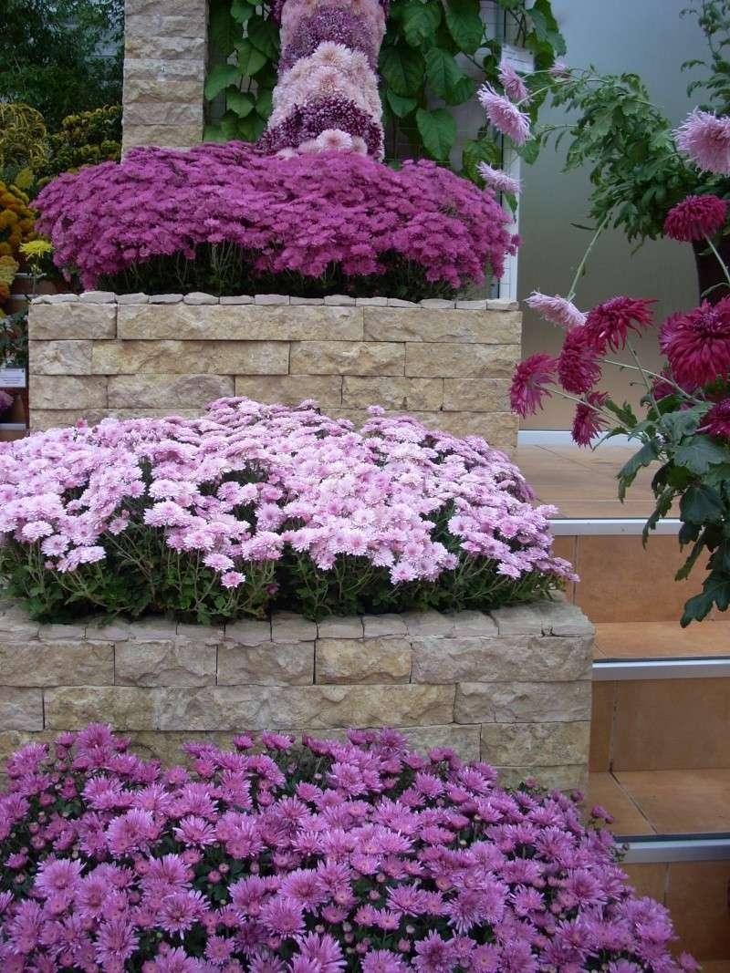 Expoziţia Flori de Toamnă-Iasi -23 octombrie – 20 noiembrie 2011-a XXXV-a editie Verni153