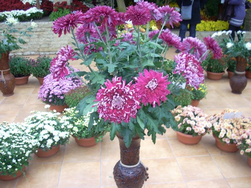 Expoziţia Flori de Toamnă-Iasi -23 octombrie – 20 noiembrie 2011-a XXXV-a editie Verni158