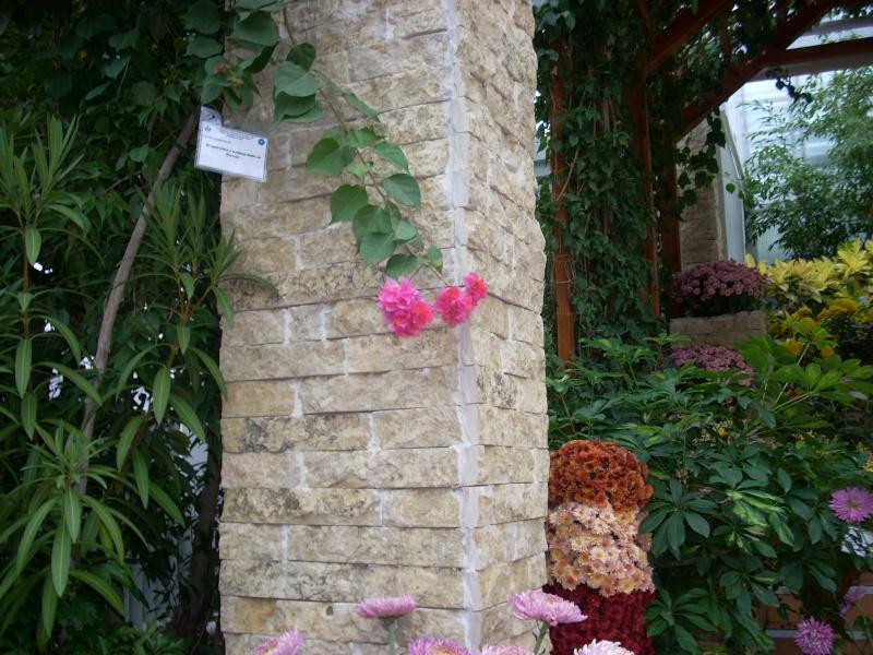 Expoziţia Flori de Toamnă-Iasi -23 octombrie – 20 noiembrie 2011-a XXXV-a editie Verni169