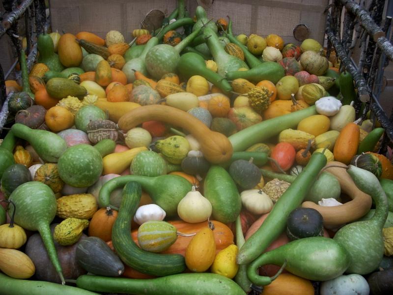 Expoziţia Flori de Toamnă-Iasi -23 octombrie – 20 noiembrie 2011-a XXXV-a editie Verni179