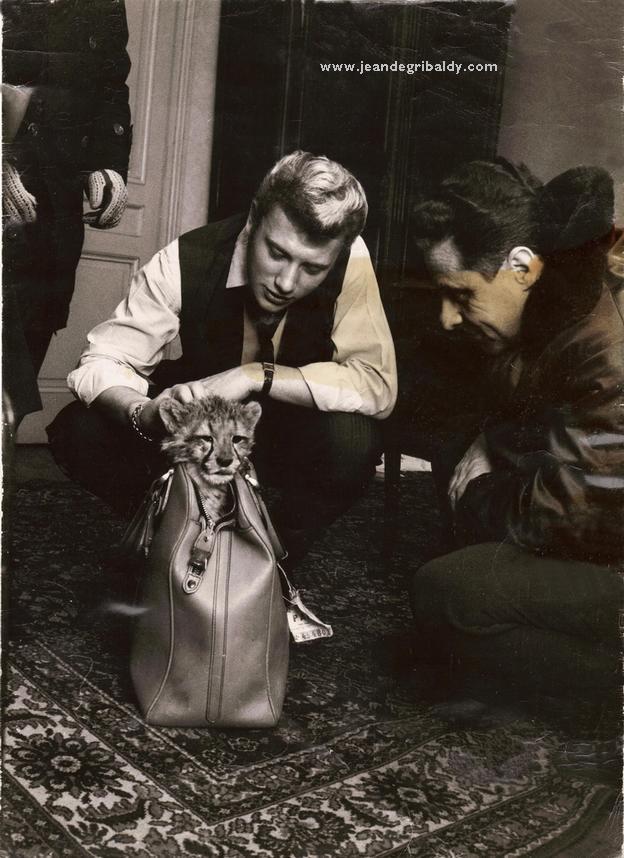 """Johnny et les """"z'animaux"""" Jean_d16"""