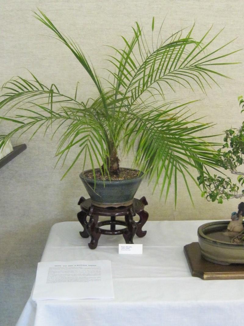 Bonsai dating website