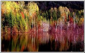 Bannière d el'automne: découvrez le nom de la gagnante en fin de post ;) - Page 3 Images75