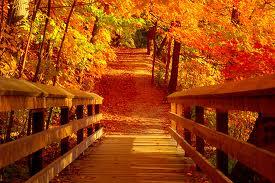 Bannière d el'automne: découvrez le nom de la gagnante en fin de post ;) - Page 3 Images76