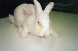 Expérimentation animale : NON au recul de la Loi sur les cosmétiques Test_c10