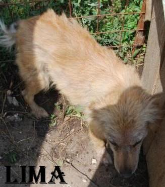Avant / Après : Comment un animal peut devenir beau grâce à l'amour Lima_r11