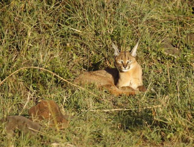Maasai Mara - September 2011 Caraca15