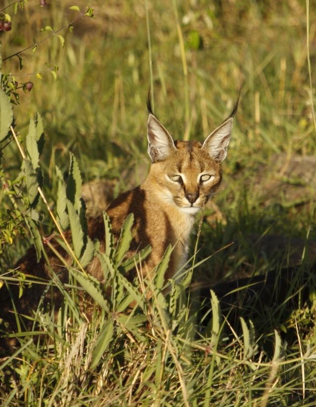 Maasai Mara - September 2011 Caraca19