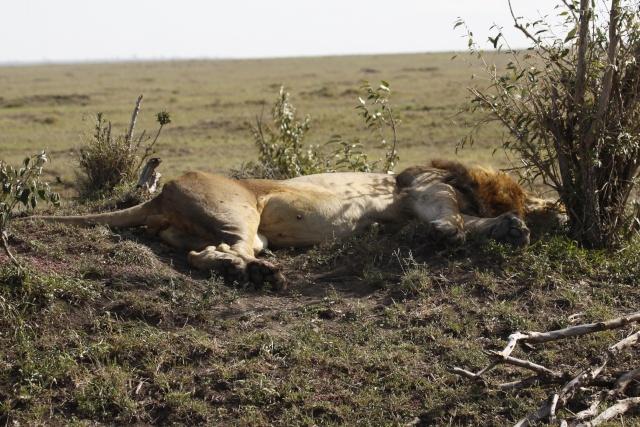 Maasai Mara - September 2011 Clawed10