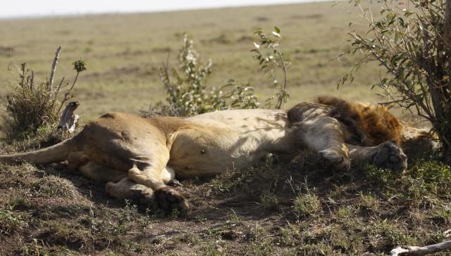 Maasai Mara - September 2011 Clawed11