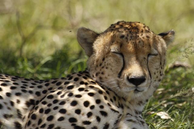 Maasai Mara - September 2011 Honeys10