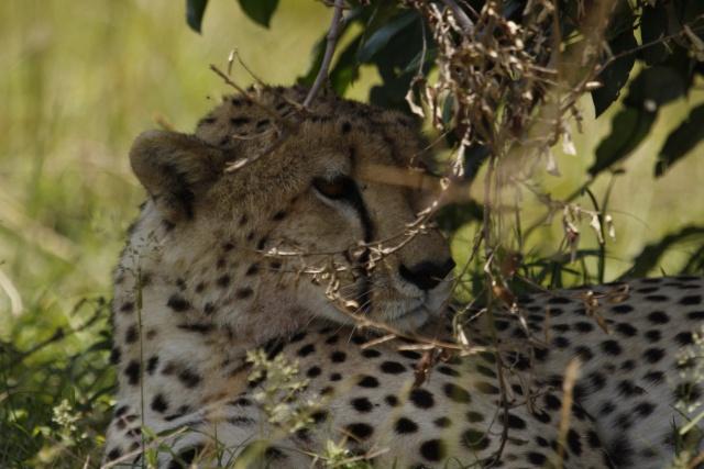 Maasai Mara - September 2011 Honeys11