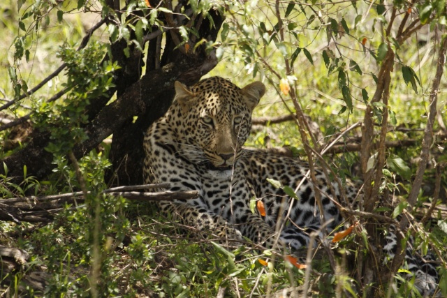 Maasai Mara - September 2011 Mara_l10