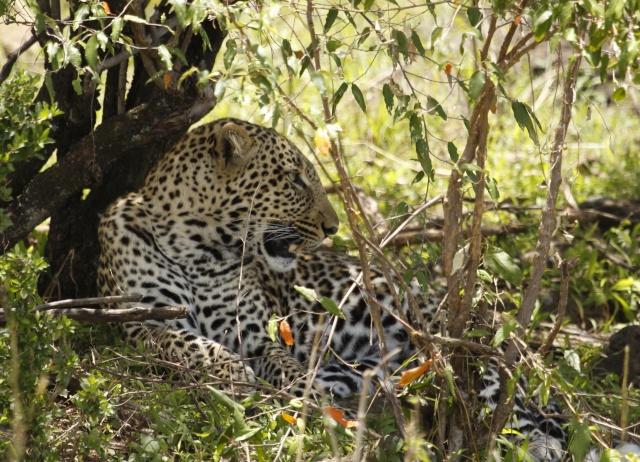 Maasai Mara - September 2011 Mara_l13