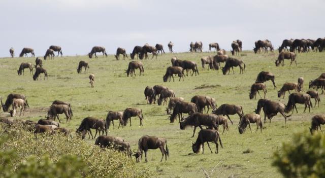 Maasai Mara - September 2011 Wildie11