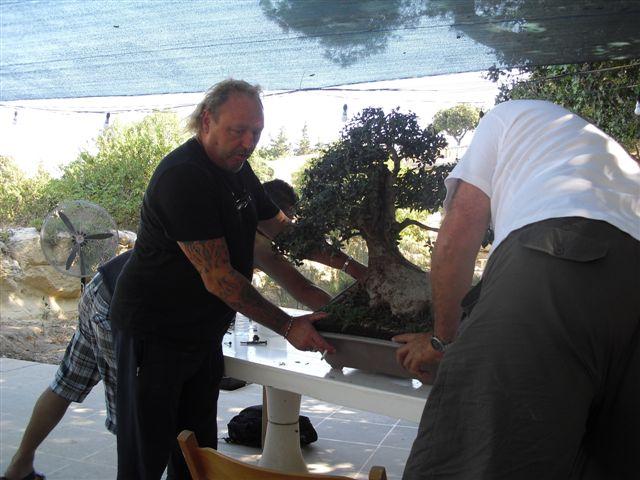 Kevin Willson Workshops at BCG's 21st Bonsai Annual Exhibition 2012 Cimg7614
