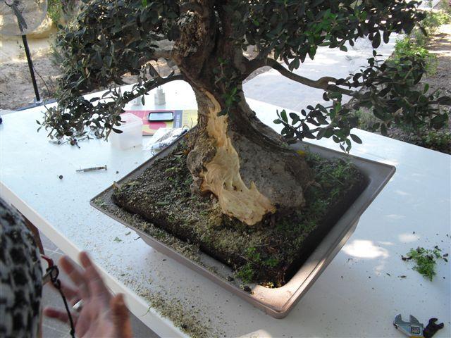 Kevin Willson Workshops at BCG's 21st Bonsai Annual Exhibition 2012 Cimg7710