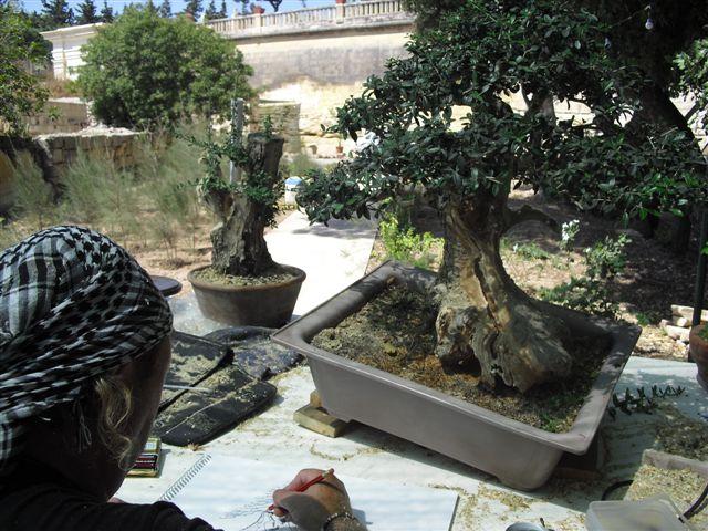 Kevin Willson Workshops at BCG's 21st Bonsai Annual Exhibition 2012 Cimg7810