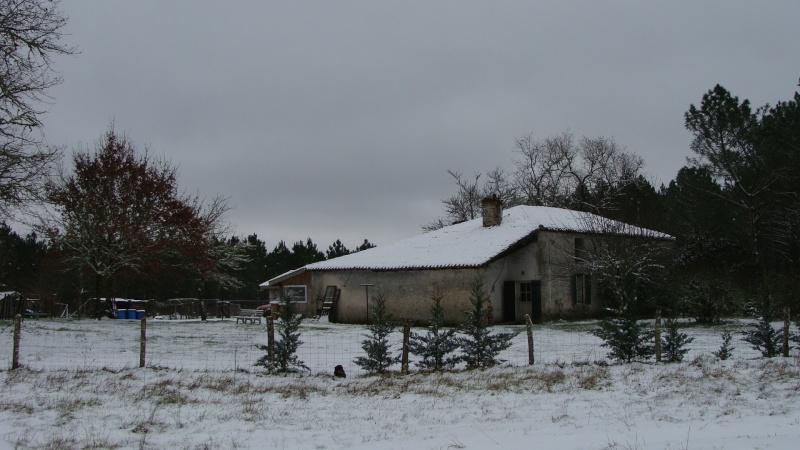 ce matin le sol est blanc Dsc01316