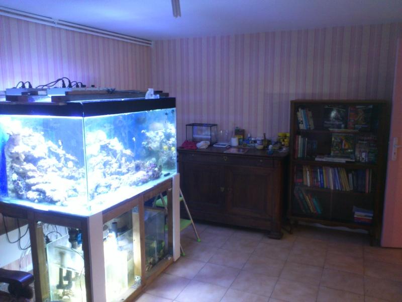 ma fishroom Dsc_0811