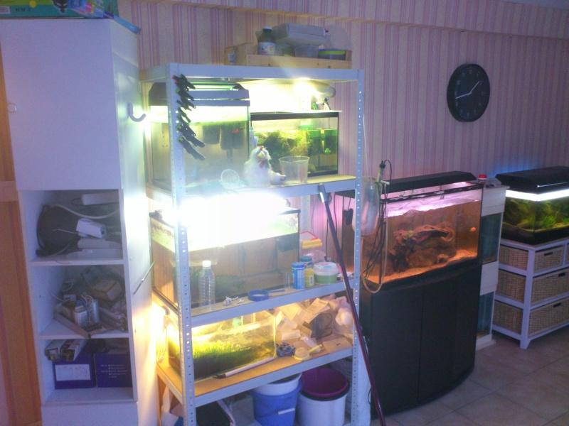 ma fishroom Dsc_0812