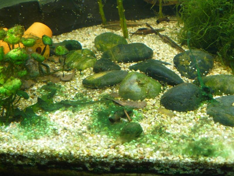 Probleme d'algue  P1070712