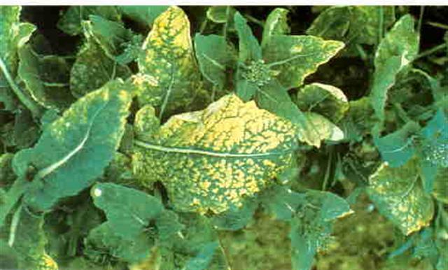 décoloration des feuilles !! S_smal10