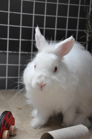 Sweety, jeune lapin blanc [Ani-nounou] Dsc_7620
