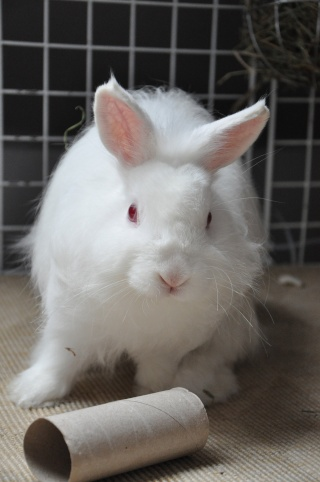 Sweety, jeune lapin blanc [Ani-nounou] Dsc_7621