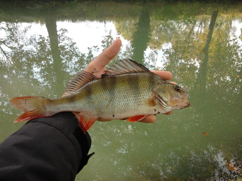 Votre pêche Carna d'Octobre Photo018