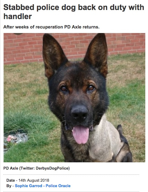 Those incredibly 'unreliable' DOGS............again! - Page 7 116