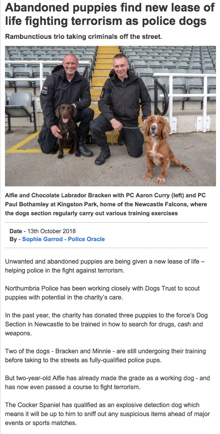 Those incredibly 'unreliable' DOGS............again! - Page 7 239
