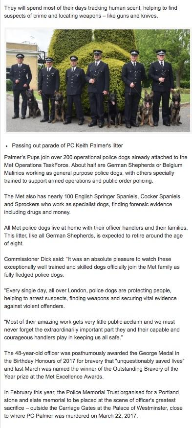 Those incredibly 'unreliable' DOGS............again! - Page 9 253