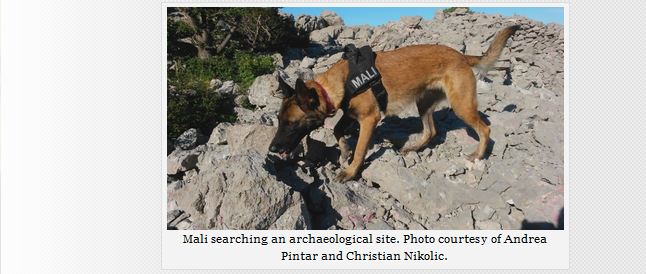 Archaeology Dogs: Cadaver Dogs on a 700 BC site 422