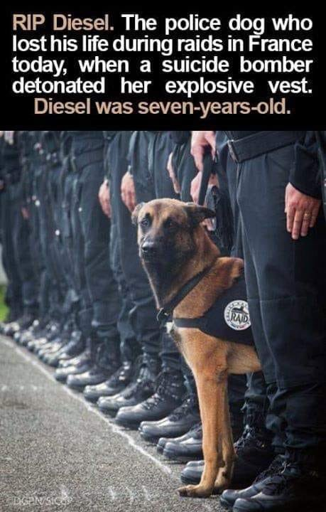 Those incredibly 'unreliable' DOGS............again! - Page 11 Diesel10