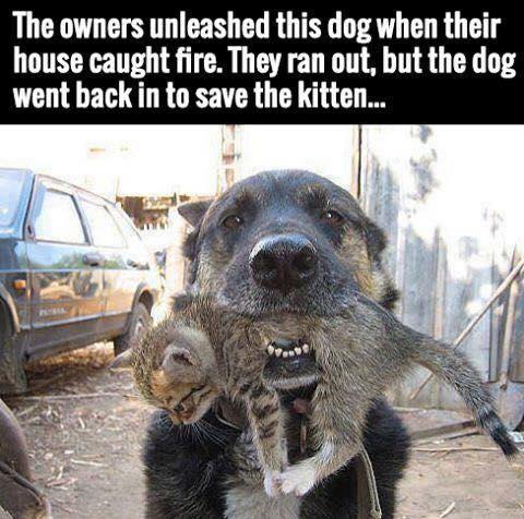 Those incredibly 'unreliable' DOGS............again! - Page 8 Dog_sa10