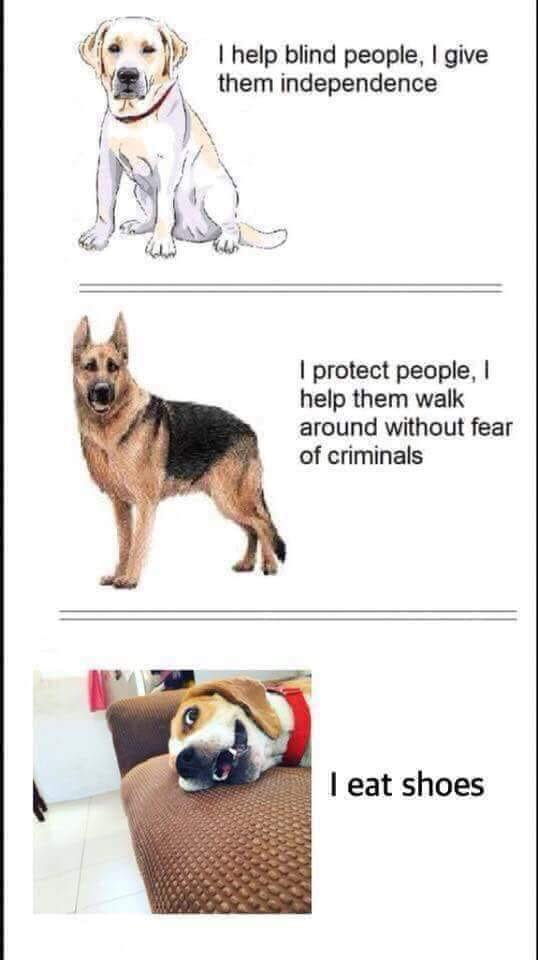 Those incredibly 'unreliable' DOGS............again! - Page 7 Dogs10