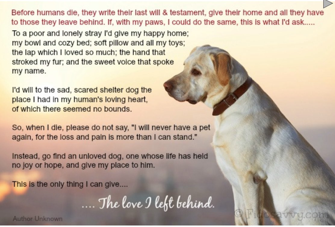 Those incredibly 'unreliable' DOGS............again! - Page 10 The_lo10