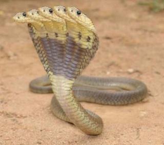 3-15 : Le Dilemme (Let That Be Your Last Battlefield) Snake010