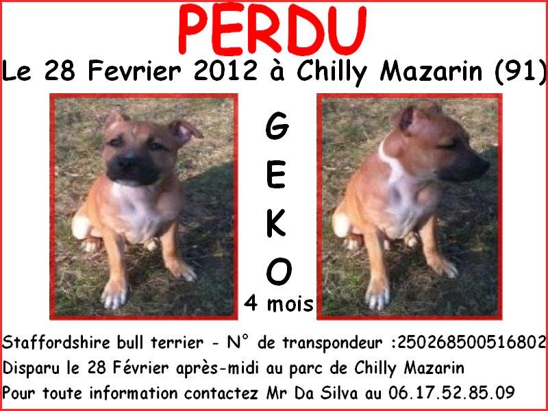 Geko,chiot 4 mois,perdu dpt 91,puce 250268500516802 42917910