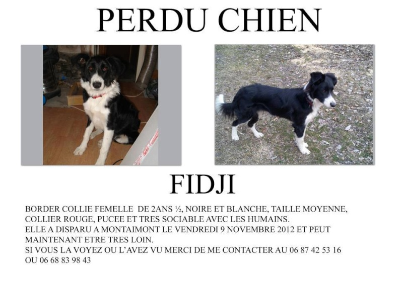 Chienne border collie perdue dpt 73 Fidji10