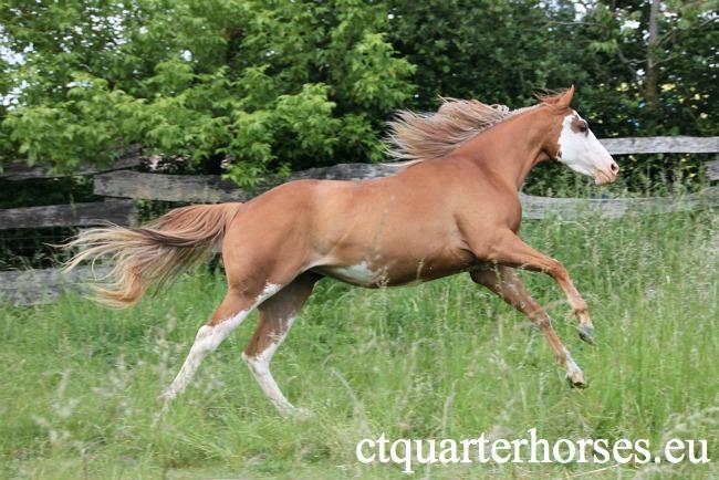 les mamans CT QUARTER HORSES - Page 2 114