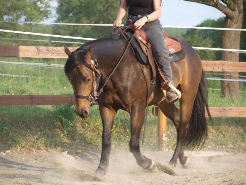 les mamans CT QUARTER HORSES - Page 3 45701810