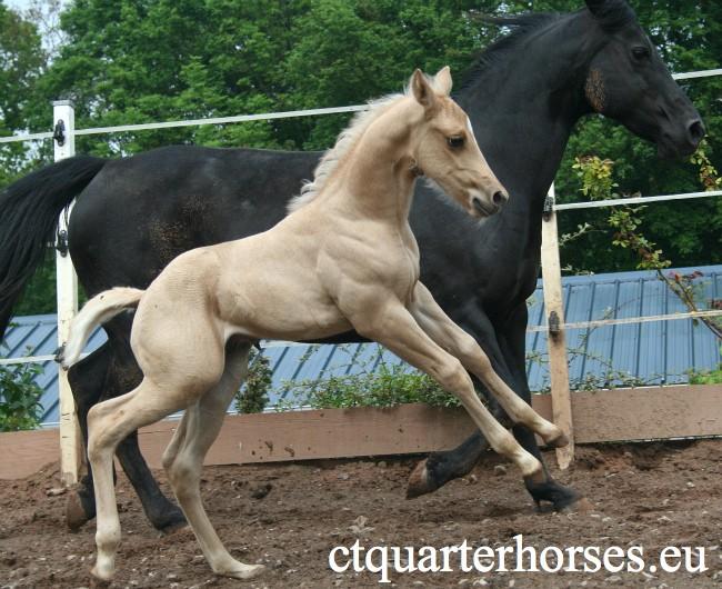 les mamans CT QUARTER HORSES - Page 2 4712