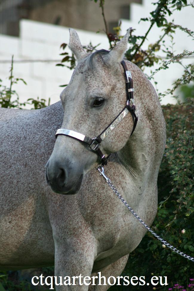 les mamans CT QUARTER HORSES - Page 2 A1910