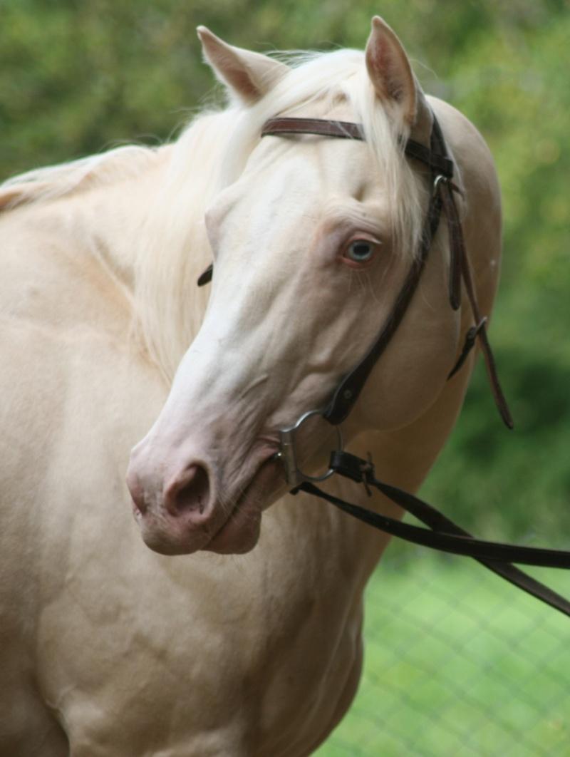 les mamans CT QUARTER HORSES - Page 2 Equiwe13