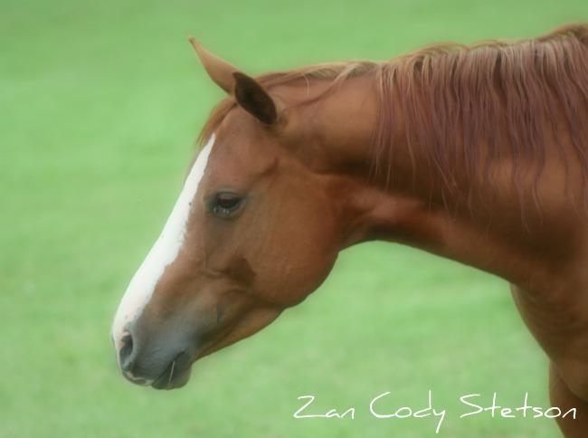 les mamans CT QUARTER HORSES - Page 2 Z1410