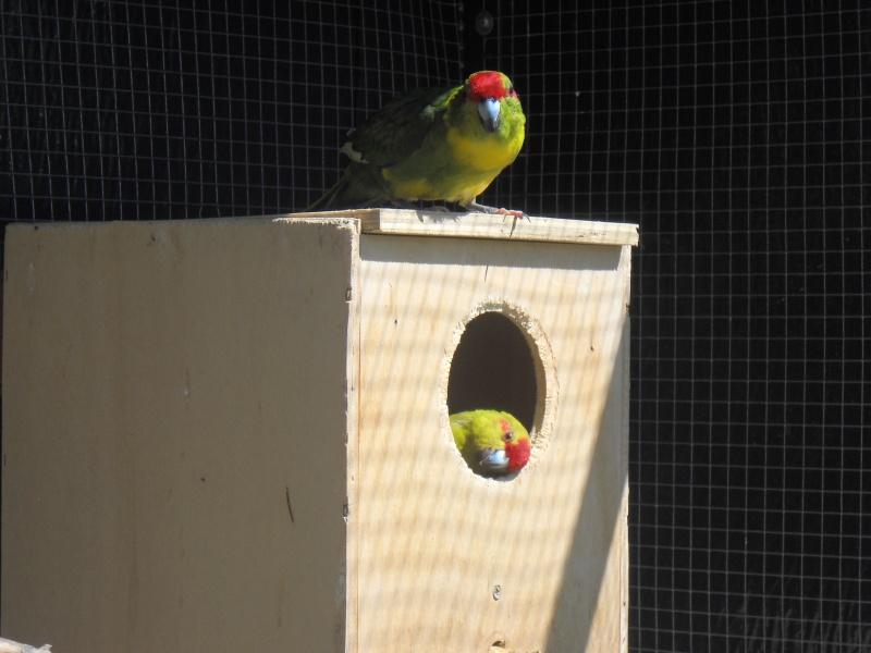 Comment avoir des nids pour 0 euro ??? Photo_87